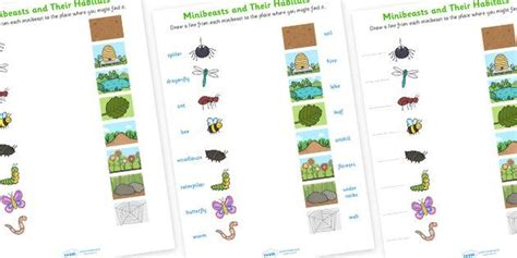 minibeasts and their habitats worksheet ideas for the