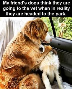 Dogs Think They Are Going To The Vet funny cute animals ...