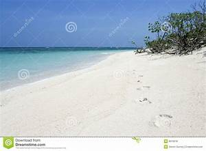 Desert Island Footprints Beach Background Royalty Free ...