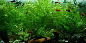 Fische Für Anfänger : ein sch nes aquarium f r den anf nger ~ Orissabook.com Haus und Dekorationen