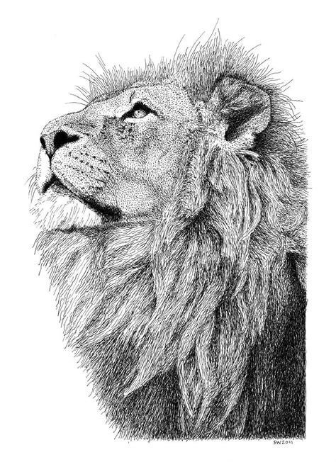 ink drawing drawinglandscape animal lion art