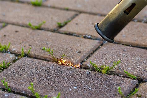 unkraut einfach und umweltfreundlich entfernen hausidee dehausidee de