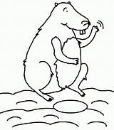 Groundhog Coloring Sheets Pages Woodchuck Popular sketch template