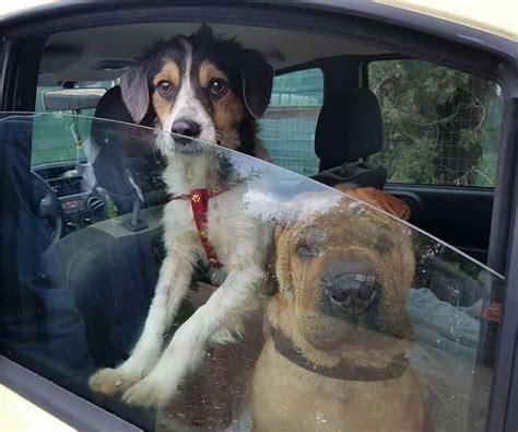 cerco casa livorno livorno giulio cerca casa come canino unico