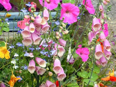 wallflowers 79kb