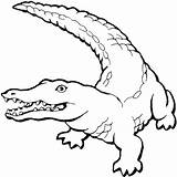 Crocodile Coloring Pages Cartoon Alligator Printable Getcolorings sketch template