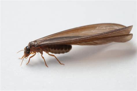 federal bug investigators termite pest control