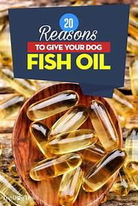 Fish Oil Dosage Chart Dogs And Fish Oil 20 Reasons Why Your Dog May Need It