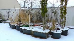 Bäume Für Kübel : baum k bel pflanzen f r nassen boden ~ Michelbontemps.com Haus und Dekorationen
