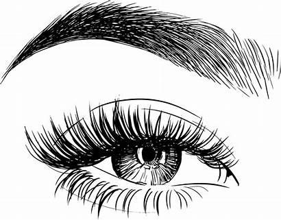 Brows Eye Eyebrow Drawing Eyebrows Brow Before