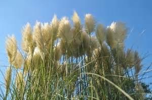 Gräser Zurückschneiden Frühjahr : zur ckschneiden von ziergr sern wann ist die richtige zeit ~ Lizthompson.info Haus und Dekorationen