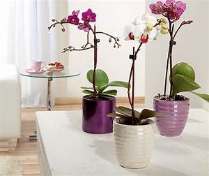 Große Zimmerpflanzen Kaufen : zimmerpflanzen online kaufen bei obi ~ Frokenaadalensverden.com Haus und Dekorationen