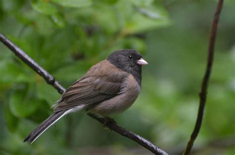 Sfv Backyard Bird Identification