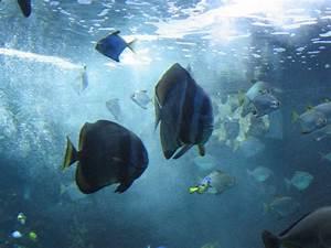 Fisch Und Pflanzenbrse Im Aquarium Erfurtde