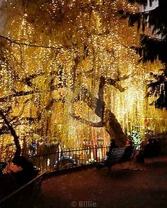 Fairy, Lights, In, Willow, Tree