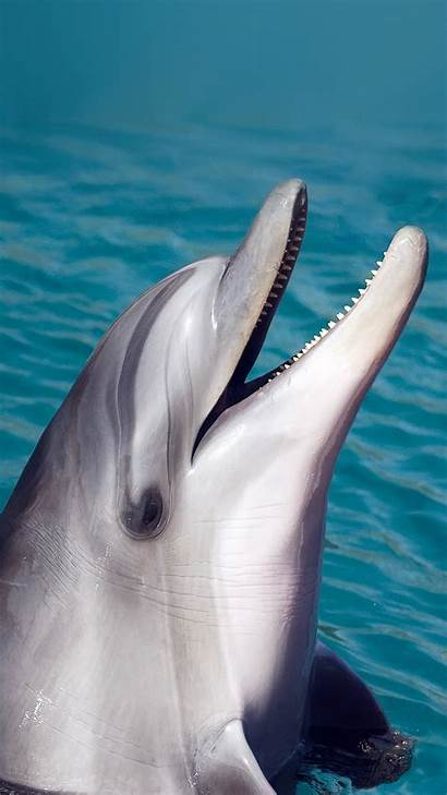 Dolphin Iphone Sea Animal Wallpapers Cool Animals