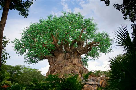 Tree Of Life Wallpapers  Atdisneyagain. Metal Bunk Beds. Mirrored Medicine Cabinets. Rice Bed. Bathroom Redesign. Grey Flooring Ideas. Backyard Hot Tub. Corner Soaking Tub. Alpaca Paint