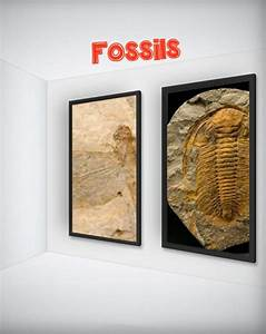 Fossils In 2020