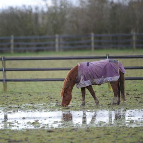 wet horses horse weather rain keeping safe muddy away