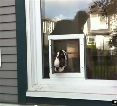 patio door pet doors doors cat doors pet doors for