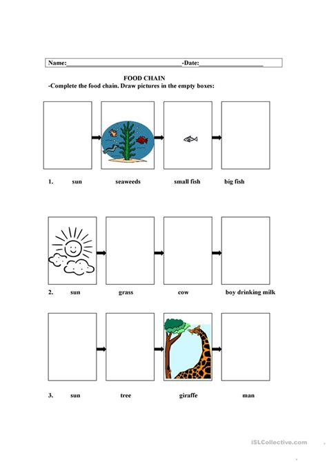 Food Chain Worksheet  Free Esl Printable Worksheets Made By Teachers