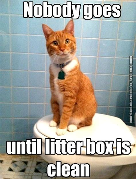 See more of funny cat memes on facebook. Litter Archives | Fun Cat Pictures