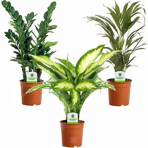 Indoor, Plant, Mix, -, 3, Plants, -, House, Office, Live, Potted, Pot, Plant, Tree, Mix, C