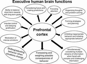 The Function Of Prefrontal Cortex Which Remain Under