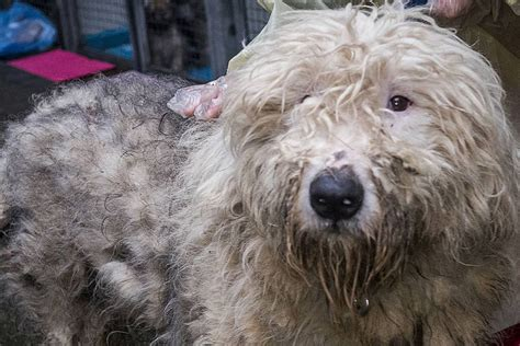 three charged with animal cruelty in major b c puppy mill