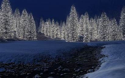 Winter Forest Night Wallpapers 1080p Outdoors Resolution