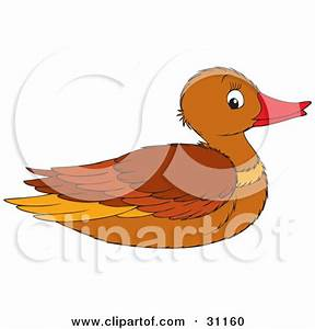 Mallard Duck Clipart - Clipart Bay