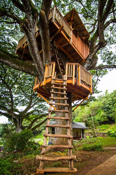 House In Tree by Photos The Treehouse Guys Diy