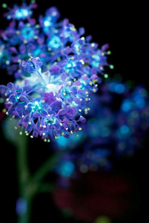 Photographer captures flowers glowing in dark – Vuing.com