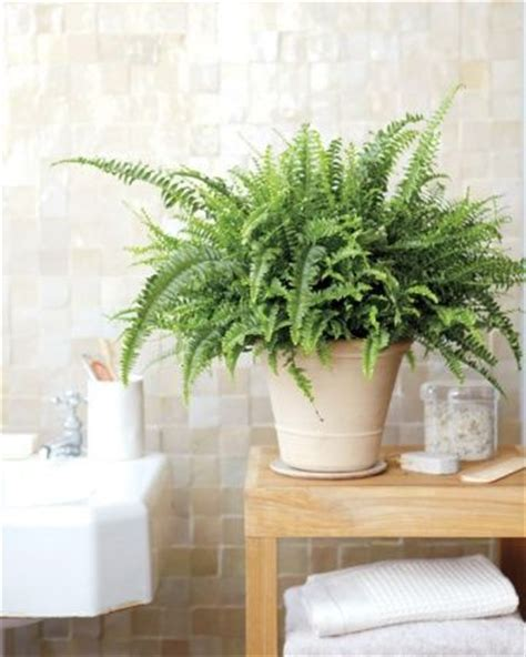 best bathroom pot plants salle de bain vs plantes jardiner en ville