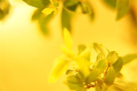 beautiful yellow hd wallpapers