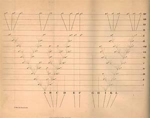 Darwin Online: overview of illustrations- Origin of species