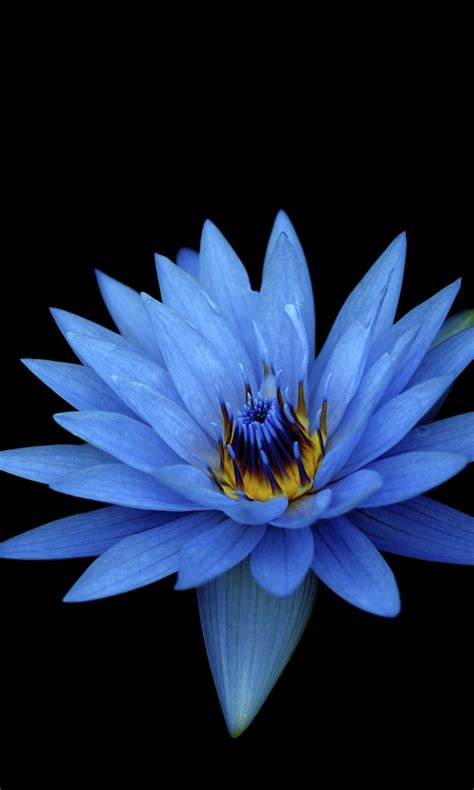sony xperia  stock blue flower wallpapers hd wallpapers