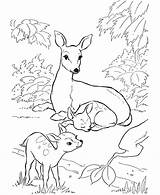 Deer Coloring Pages Printable sketch template