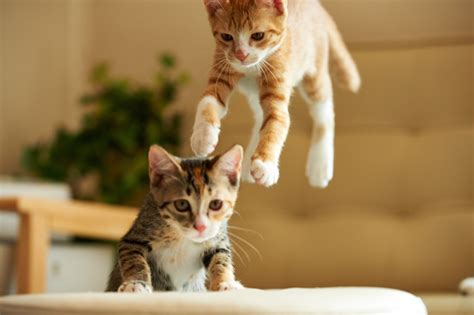 Amazing Photographs Of Cats In Flight  20 Photos Famepace