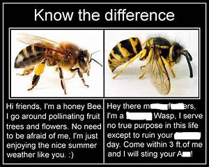 Bug Eric: Bee vs. Wasp Memes Perpetuate Ignorance