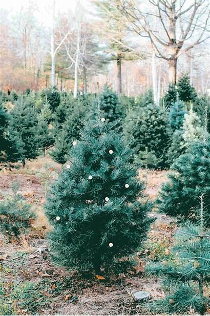 Christmas Tree Farm Outing December Merry Bygabriella