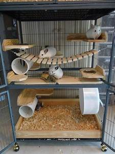 Pin by Karla Mendonça on Chinchilla cages | Pinterest ...