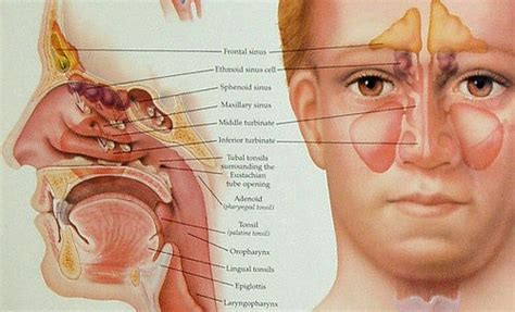 Afraid of Sinus Surgery? - Atlanta ENT