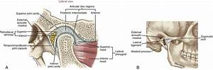Kinesiology Of Mastication And Ventilation