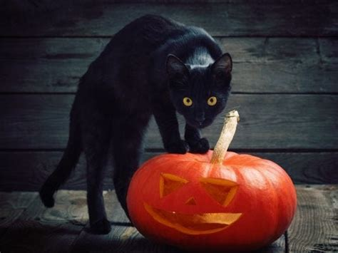 Halloween Myths No Razors Or Poison In Candy Black Cats