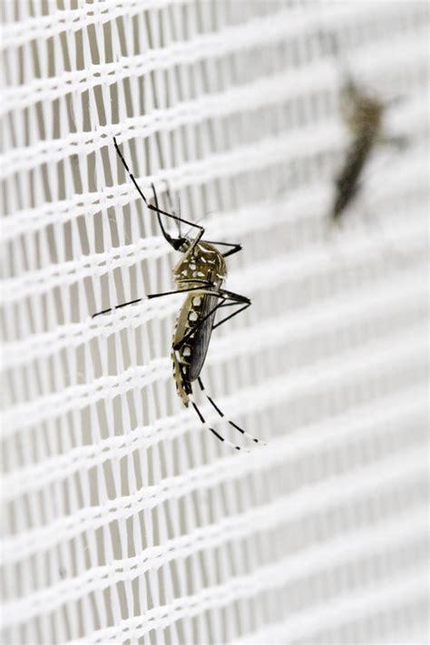 Ameisen Bekaempfen Die Besten Hausmittel by Stechm 252 Cken Bek 228 Mpfen Oder Vertreiben Die Besten