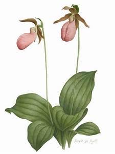 17 Best images about Botanicals on Pinterest