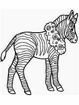 Coloring Pages Zebra sketch template