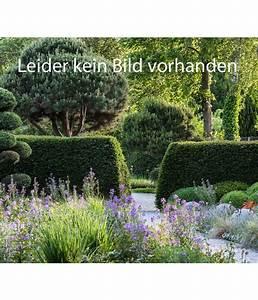Dauerblüher Sommer Winterhart : sonnenhut dehner ~ Michelbontemps.com Haus und Dekorationen