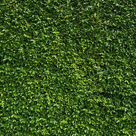 nature background images  pinterest photo